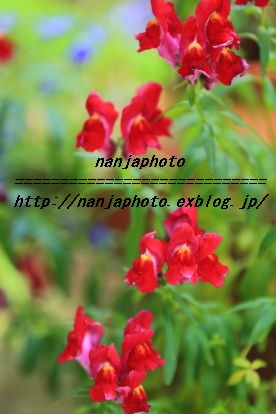 e0268999_1533793.jpg