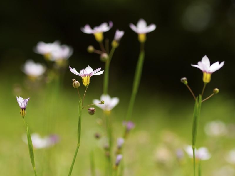 日本経済大学イングリュッシュガーデンにバラを見に行って来ました。 その2_a0037907_21354289.jpg