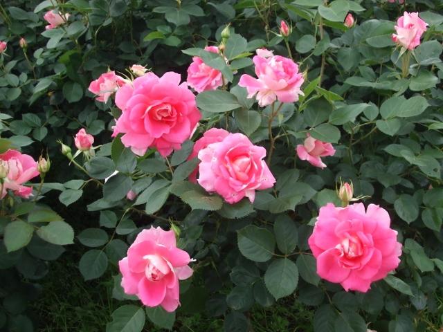 花の美術館_e0164724_15161097.jpg
