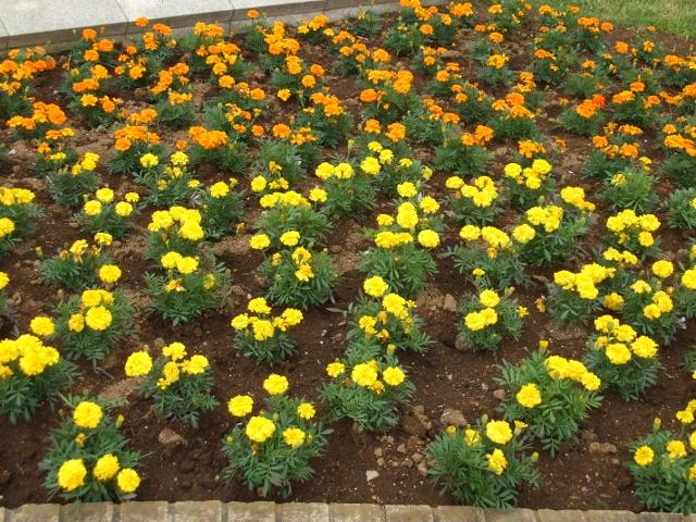 花の美術館_e0164724_1520258.jpg