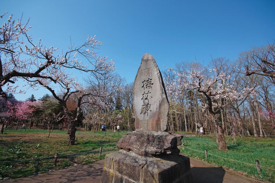 サクラが満開の北海道神宮_c0223825_0403161.jpg
