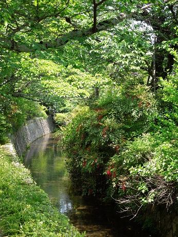 哲学の道    ~京都~_c0235725_0471359.jpg