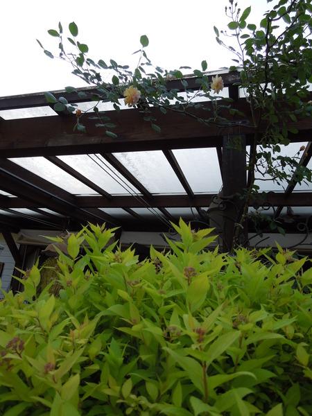 我が家の庭も賑やかになりましたNO2_d0171630_1648096.jpg
