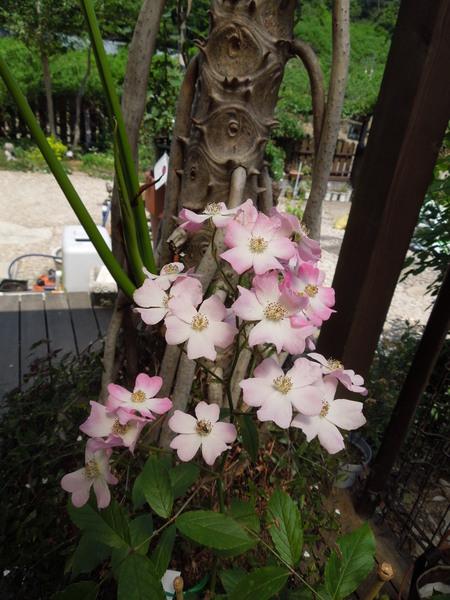 我が家の庭も賑やかになりましたNO2_d0171630_16495763.jpg