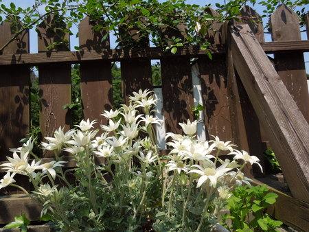 我が家の庭も賑やかになりましたNO2_d0171630_16503533.jpg