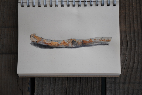 枝を描く_d0101846_73379.jpg