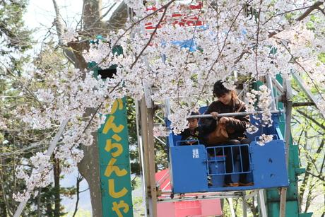 桜景 2012_d0179447_001932.jpg