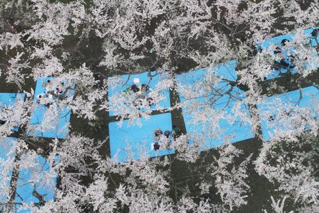 桜景 2012_d0179447_2354658.jpg