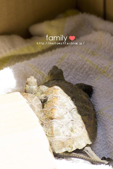 FAMILY_d0124248_18112619.jpg