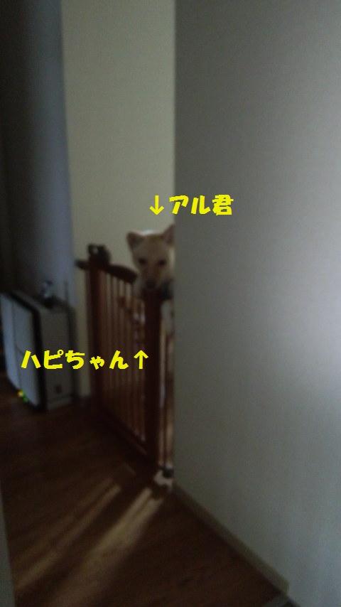 d0226051_740466.jpg