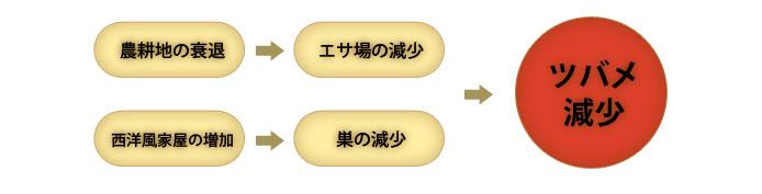 日本のツバメ_d0129766_944231.jpg