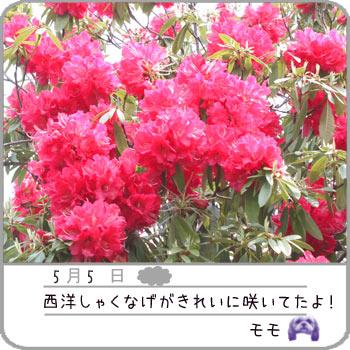 b0024183_21225262.jpg