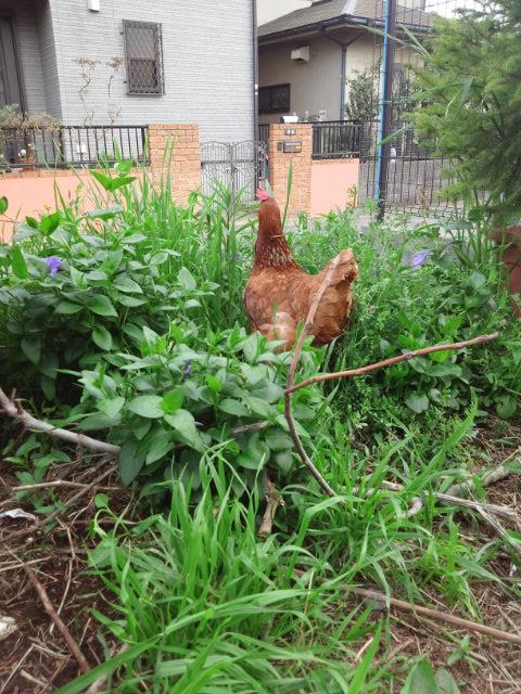 新しく花壇を作りました_c0197684_19431125.jpg