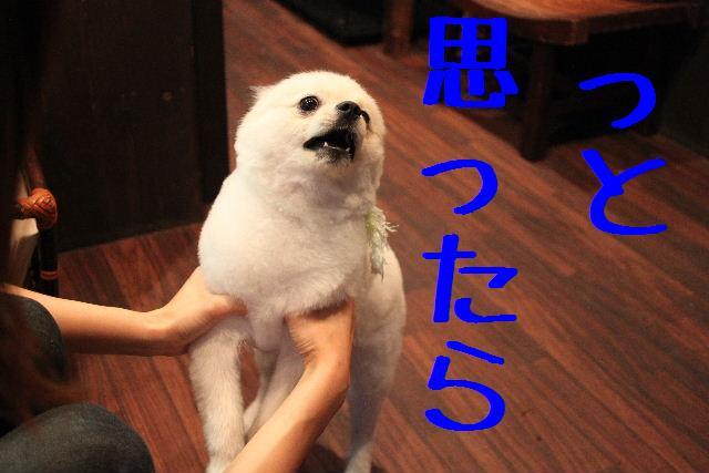 b0130018_9254026.jpg