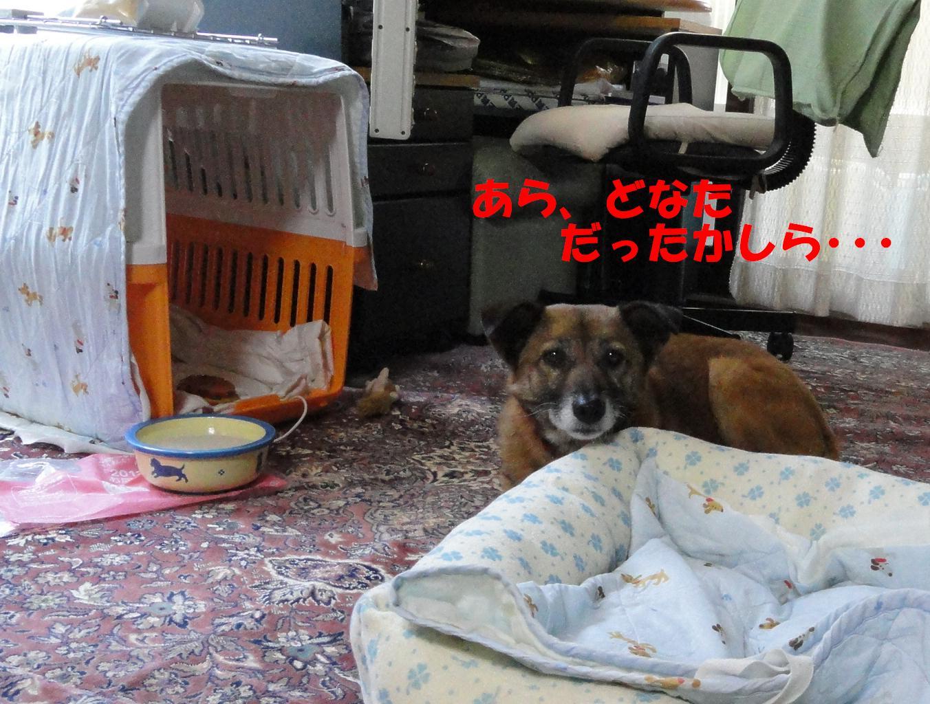 b0207320_1821112.jpg