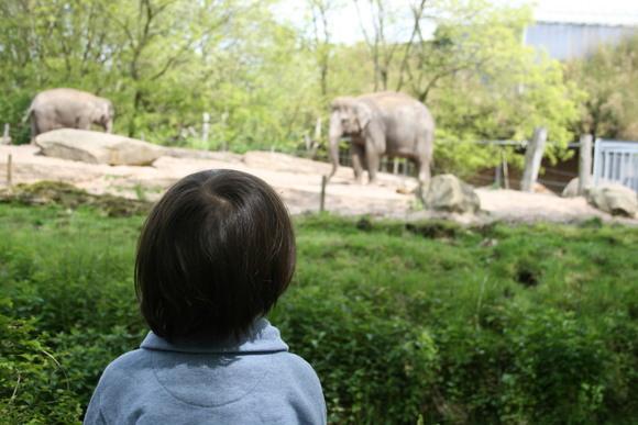 ロッテルダムの動物園 _b0193324_1771430.jpg