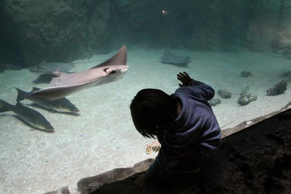 ロッテルダムの動物園 _b0193324_179353.jpg