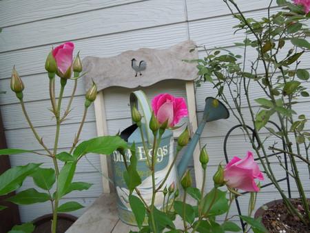 我が家の庭も賑やかになりましたNO3_d0171630_17412143.jpg
