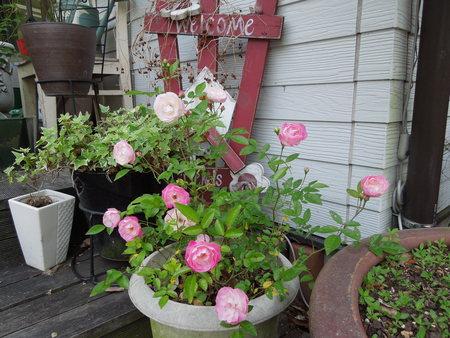 我が家の庭も賑やかになりましたNO3_d0171630_17414738.jpg