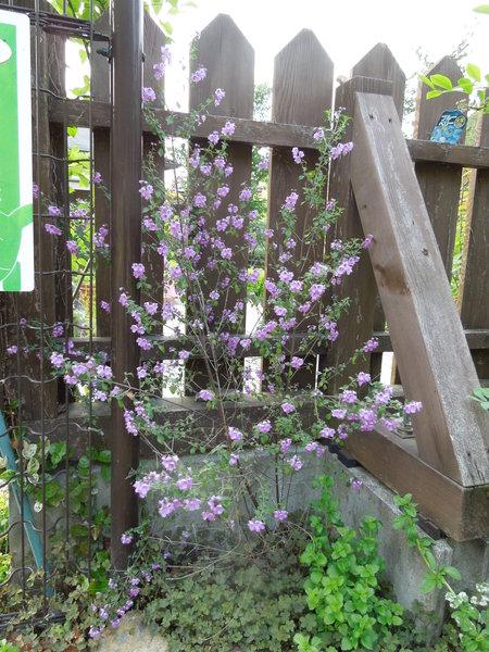 我が家の庭も賑やかになりましたNO3_d0171630_17425620.jpg