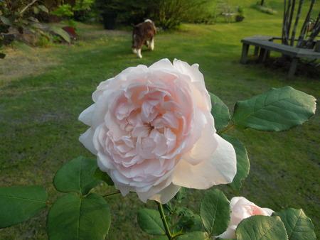 我が家の庭も賑やかになりましたNO3_d0171630_1744457.jpg