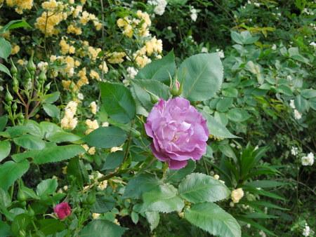 我が家の庭も賑やかになりましたNO3_d0171630_17444955.jpg