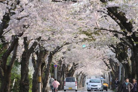 桜景 2012_d0179447_072069.jpg