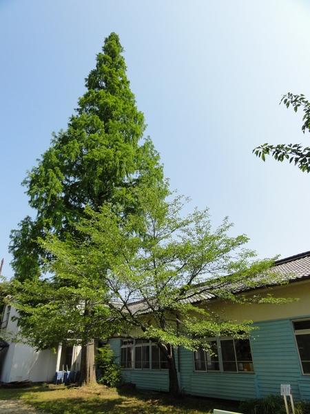 定例活動日:植樹と毛虫とのにらめっこ_c0108460_1837182.jpg