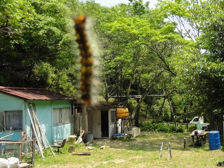 定例活動日:植樹と毛虫とのにらめっこ_c0108460_18501767.jpg