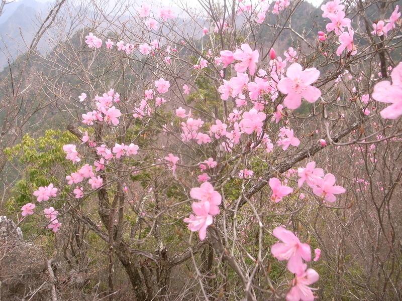 5月8日 馬道〜大山縦走ハイキング 開催しました。_b0209774_153354100.jpg