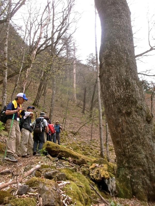 5月8日 馬道〜大山縦走ハイキング 開催しました。_b0209774_1643162.jpg