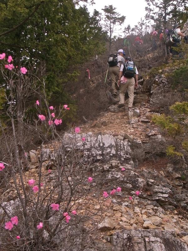 5月8日 馬道〜大山縦走ハイキング 開催しました。_b0209774_16553546.jpg