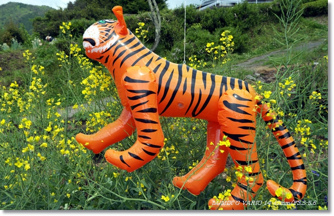 虎が出た~_c0054876_16562222.jpg