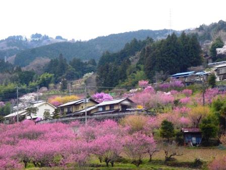 東秩父村の桃源郷 : あたはママの素敵な日々