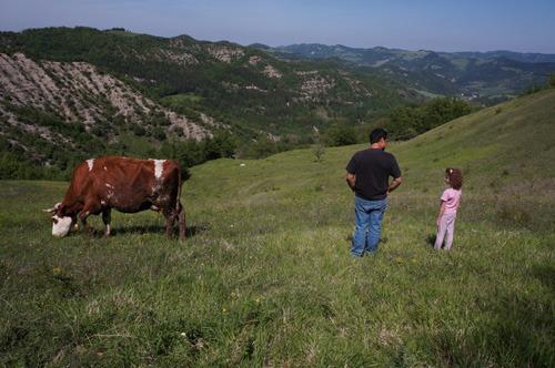 牛の話_f0106597_17182916.jpg
