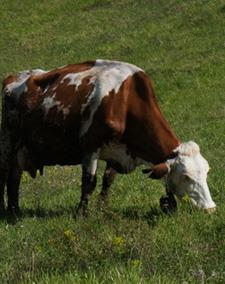 牛の話_f0106597_17195137.jpg