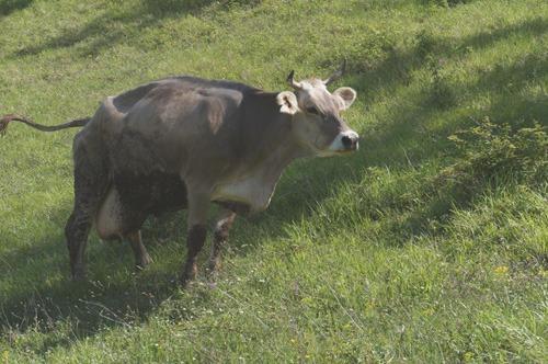 牛の話_f0106597_17355355.jpg