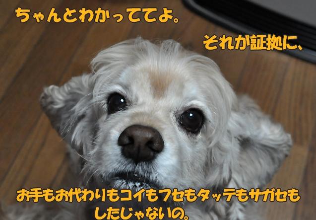 b0067012_14472256.jpg