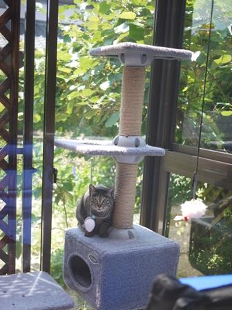 猫のお友だち クロスくんはなこちゃん編。_a0143140_102482.jpg