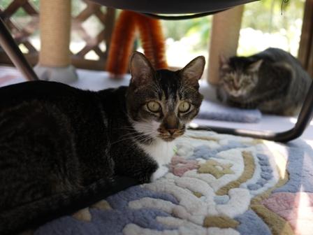 猫のお友だち クロスくんはなこちゃん編。_a0143140_9563146.jpg