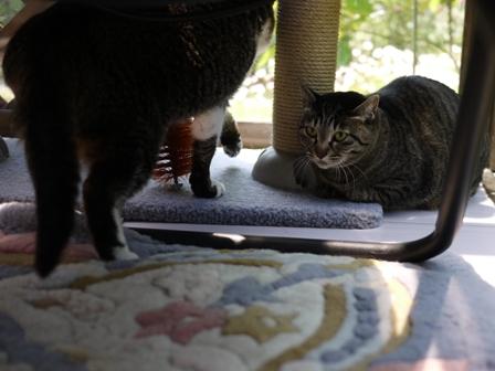 猫のお友だち クロスくんはなこちゃん編。_a0143140_958141.jpg