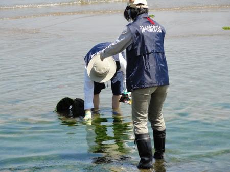 「箱作自然海岸清掃」・・・主催「自然と本の会」_c0108460_2222369.jpg