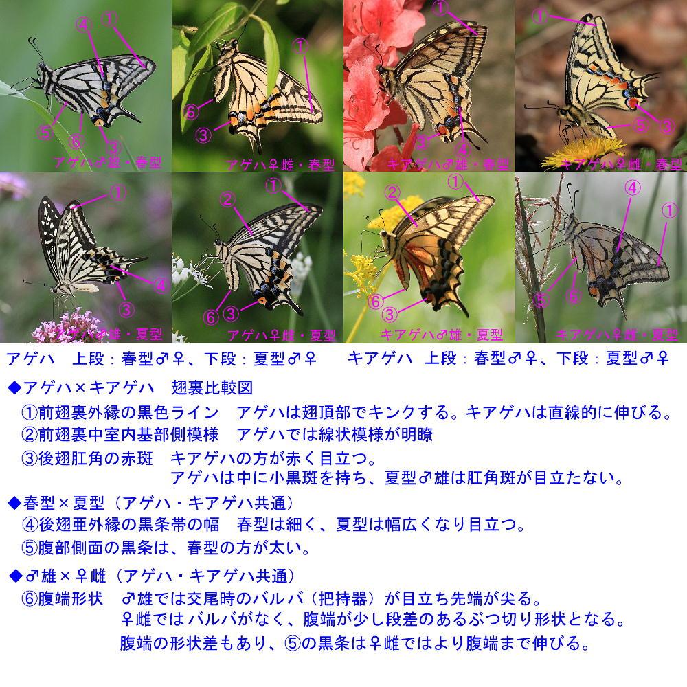 a0146869_5355618.jpg