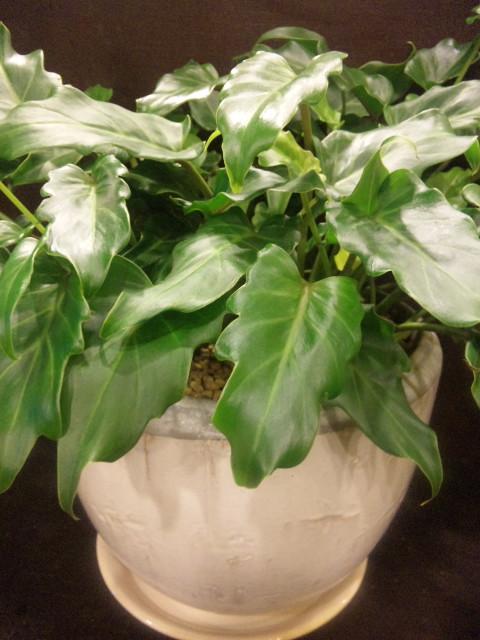 植物も家族。_a0160970_22194650.jpg