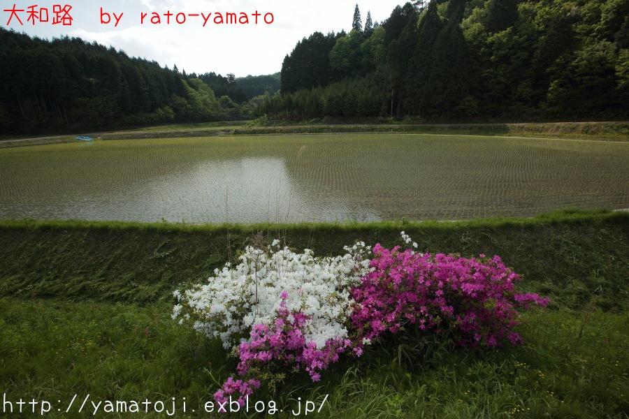 f0236776_5103941.jpg