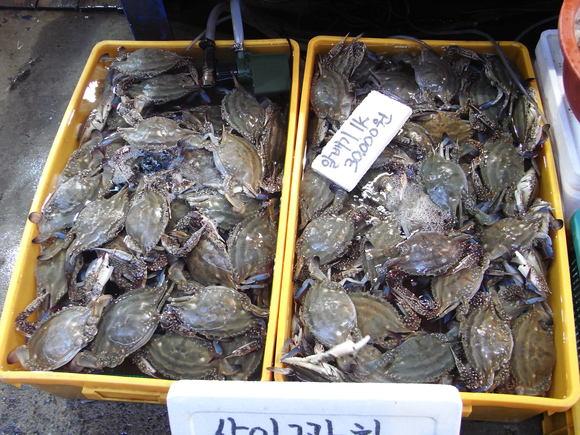 ソウルの魚市場  ~ノリャンジン水産市場再訪~  120506_c0237483_0544967.jpg