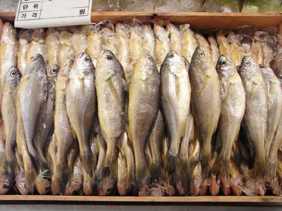 ソウルの魚市場  ~ノリャンジン水産市場再訪~  120506_c0237483_10361.jpg