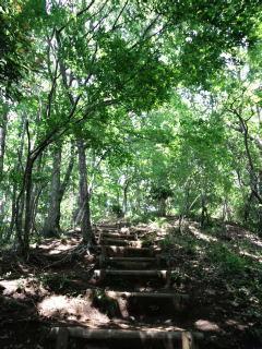 森林セラピー 新緑の白山順礼コース_e0231387_14594993.jpg