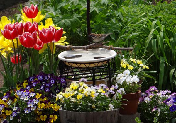冬の鳥の贈り物と、雀の水場のビオラ♪_a0136293_17463132.jpg