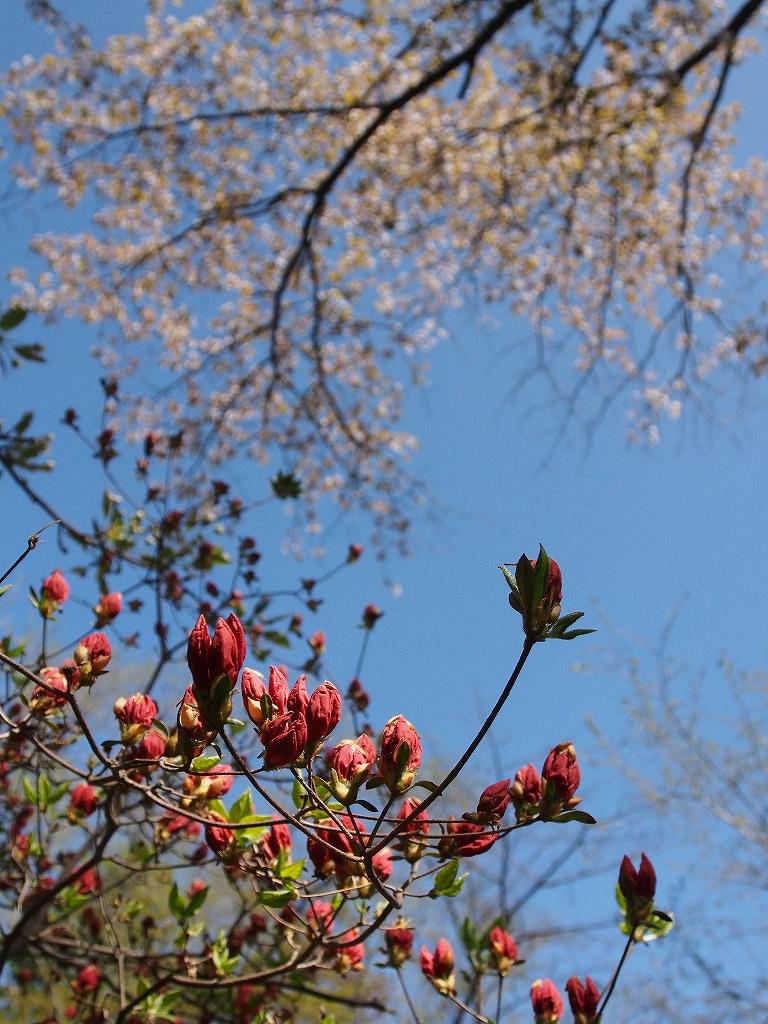 桜_f0138096_18142822.jpg